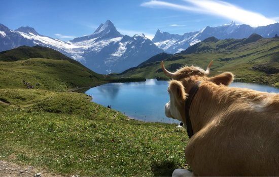 Grindelwald, Suiza: Bachalpsee