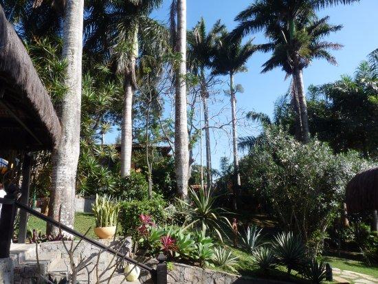 Pousada Le Palmier: Las palmeras que le dieron su nombre