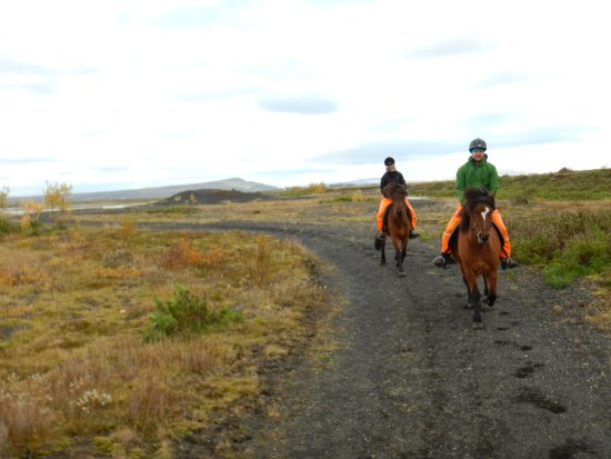 Selfoss, Islandia: Horse riding in Iceland