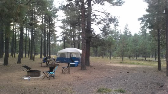 Forest Lakes, AZ: Our camp site