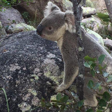 Magnetic Island, Australien: photo0.jpg