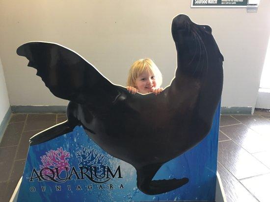 Aquarium of Niagara: photo0.jpg