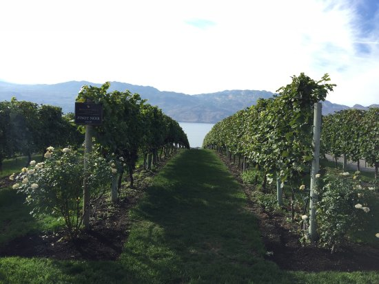 West Kelowna, Canadá: Mission Hill Family Estate Winery