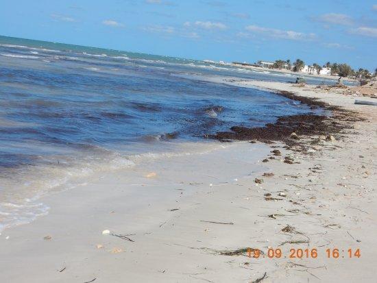Green Palm: море всё в водорослях