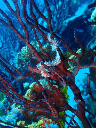 Scuba Steve's Diving Ltd.: Gorgeous colors