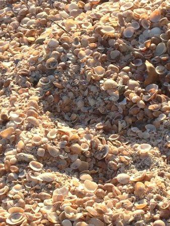 Gustavia, São Bartolomeu: conchas