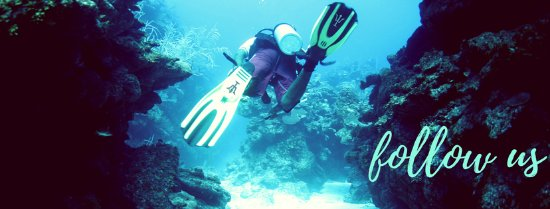 Blue Heaven Dives: Swimming the canyons of the reef