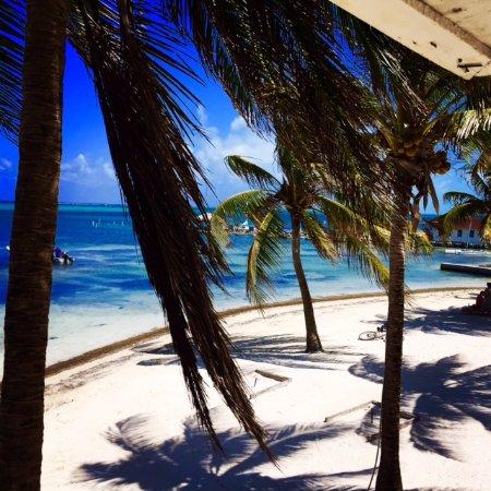 Blue Heaven Dives: San Pedro