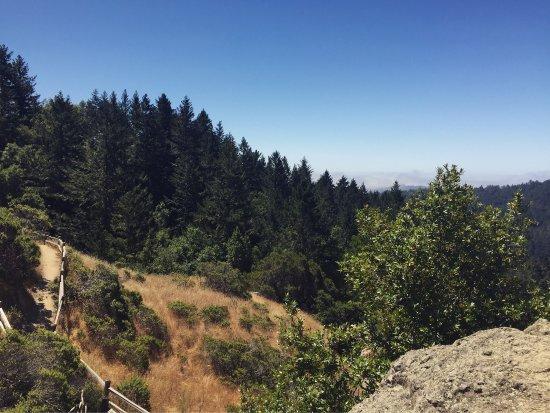 Mill Valley, CA: photo6.jpg
