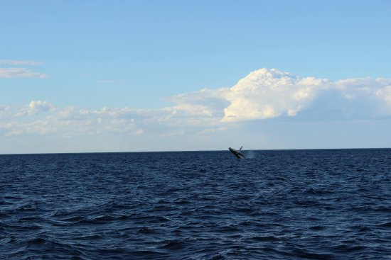 Spirit of Gold Coast Whale Watching: Nature is absolutely amazing !