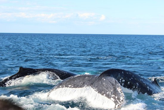 Spirit of Gold Coast Whale Watching: Private show !!