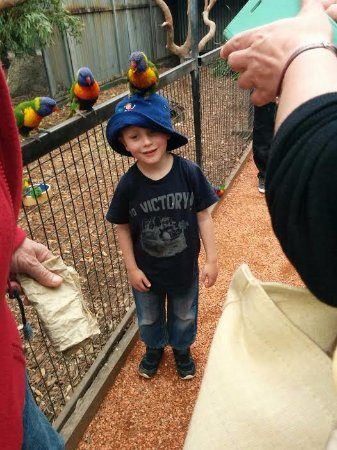 Nulkaba, Australia: A great opportunity for children to feed the birds.