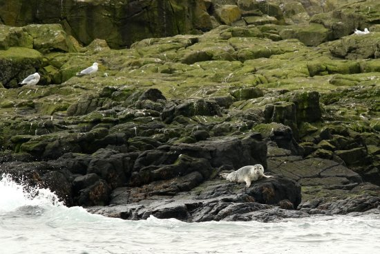 Anstruther, UK: Seal