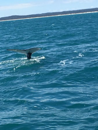 Херви-Бей, Австралия: Tale wave :)