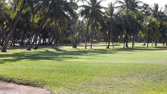 Legend Golf: Green
