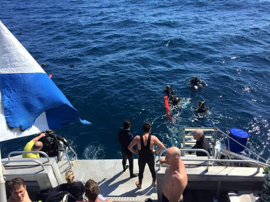 Fremantle, Αυστραλία: Apre Dive
