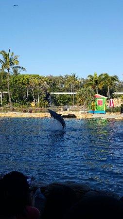 Main Beach, Australia: Dolphin!!!