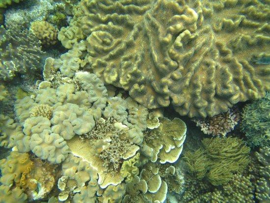 Distrik Cairns, Australia: Moore Reef