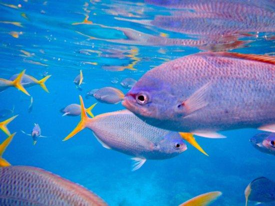 แคนส์, ออสเตรเลีย: Moore Reef