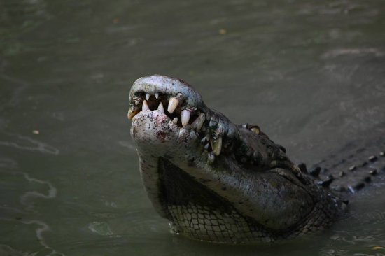 棕櫚灣照片