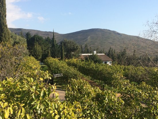 Marianne Wine Estate Guesthouse: photo3.jpg