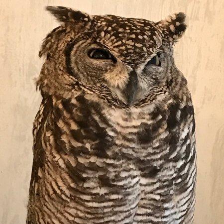 Image of: Funny Owl Cafe Akiba Fukurou Cute Owls Tripadvisor Cute Owls Picture Of Owl Cafe Akiba Fukurou Chiyoda Tripadvisor