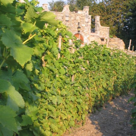 Sutton, Kanada: Vineyard and Cellars