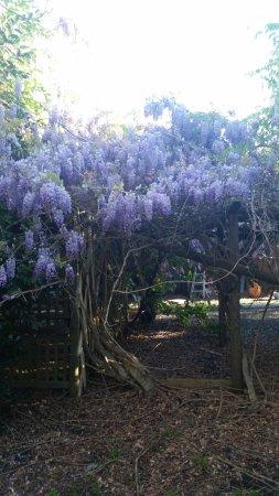 Yatte Yattah, Australie : Gardens.