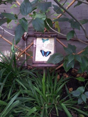 Viagrande, إيطاليا: butterfly history