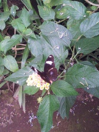 Viagrande, إيطاليا: fiori e farfalle