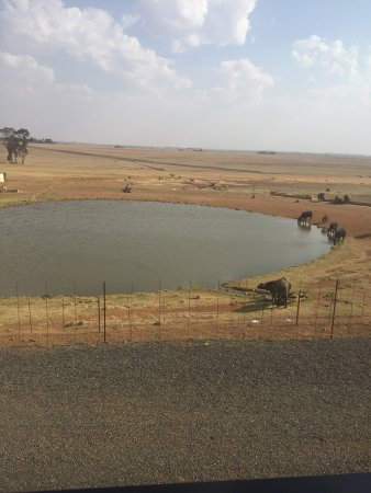 Middleburg, Afrika Selatan: photo1.jpg