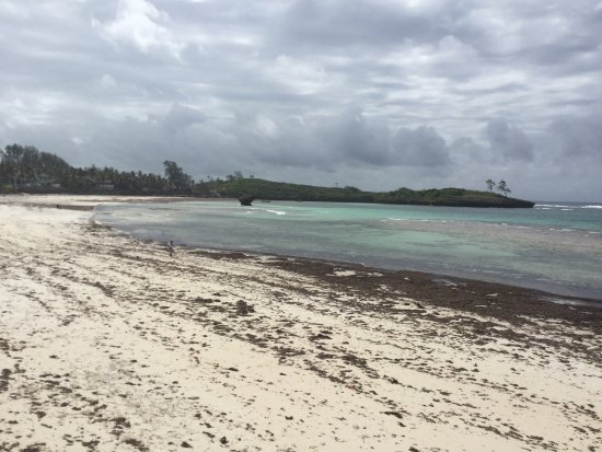 Les algues envahissent la plage en juillet