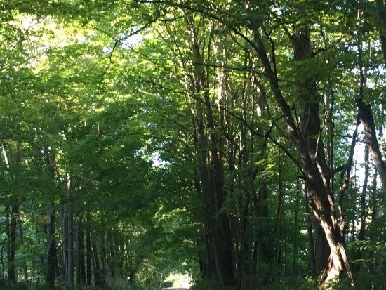 Dorset, VT: Emerald lake state park