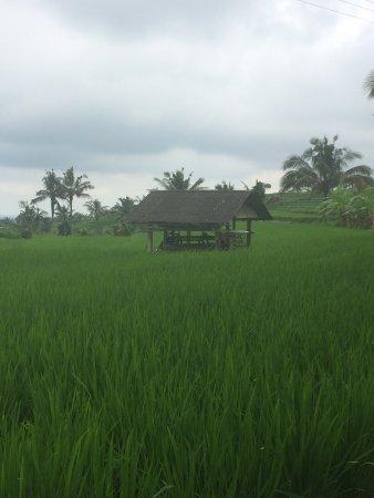 Jatiluwih Warisan Budaya Dunia: Jatiluwih Green Land