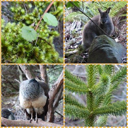 Launceston, Australien: Flora and Fauna