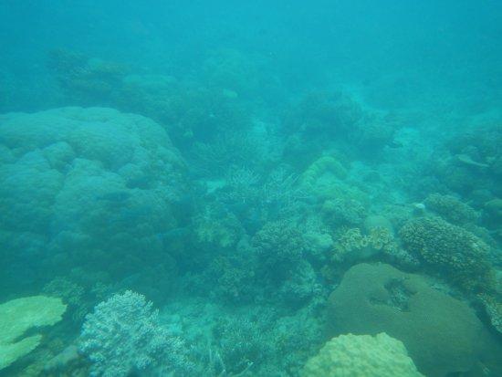 Mission Beach, Austrália: reef