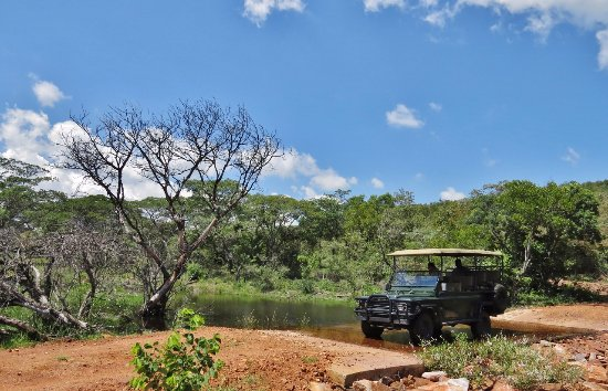 Bulge River, Sydafrika: Game drive