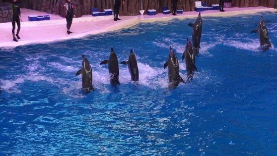 Zhuhai, Cina: Le spectacle des dauphins.
