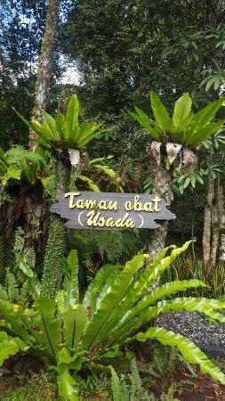 Baturiti, Indonesia: 20160921_153059_large.jpg