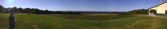 Westfield, estado de Nueva York: Panorama from Noble winery