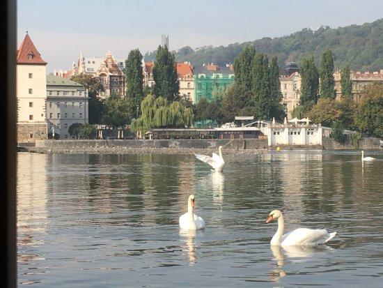 Boat Hotel Matylda Ristorante: Arrivano per la colazione !