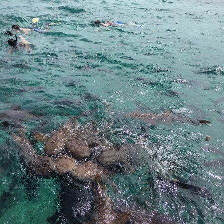 Caye Caulker, Belice: Shark Ray Alley!