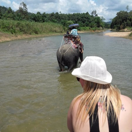 Kok Chang Safari Elephant Trekking: Precioso
