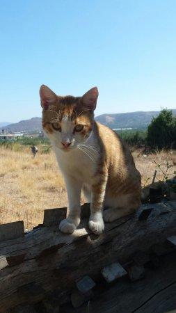 Kaliviani, Greece: 20160930_131425_large.jpg