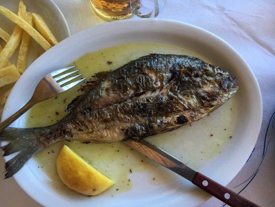 Kerames, Grecja: dorade