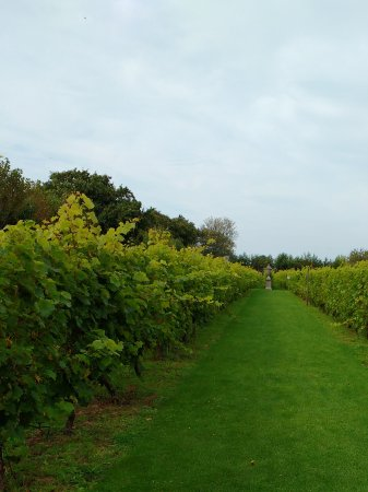 St. Mary, UK: Vineyard