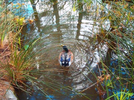 Puigpunyent, Spanyol: прудик в парке Галатцо