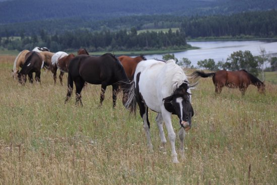 Kamloops, Kanada: The herd teaches our horses valuable lessons