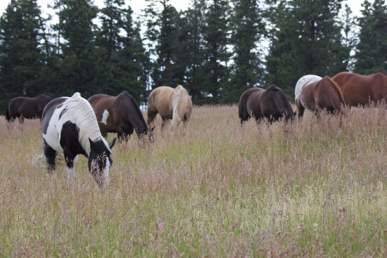 Kamloops, Kanada: lessons from the herd!