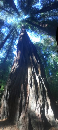 Avenue of the Giants: photo0.jpg